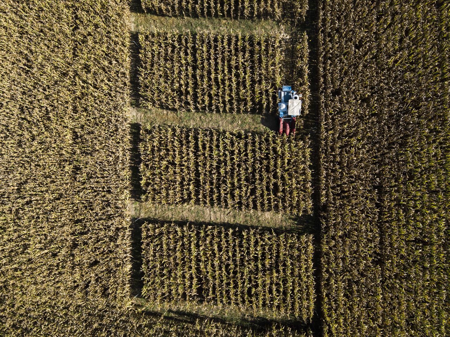 Estudio de campos de maíz